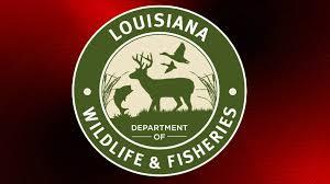 Photo of Agents Cite Louisiana Man for Killing a Louisiana Black Bear in Iberia Parish